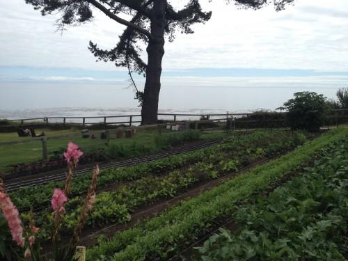 Esalen garden