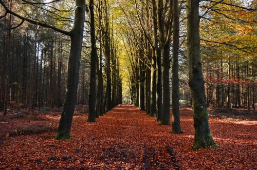 autumn-3764